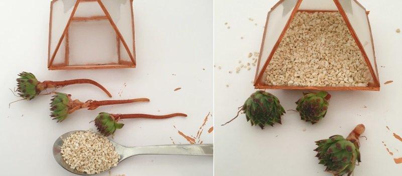 Remplir mini terrarium