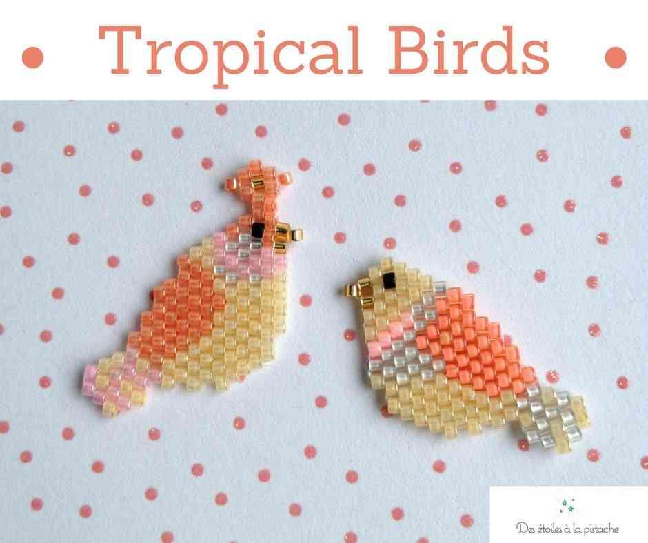 Low tropical birds   des %c3%a9toiles %c3%a0 la pistache