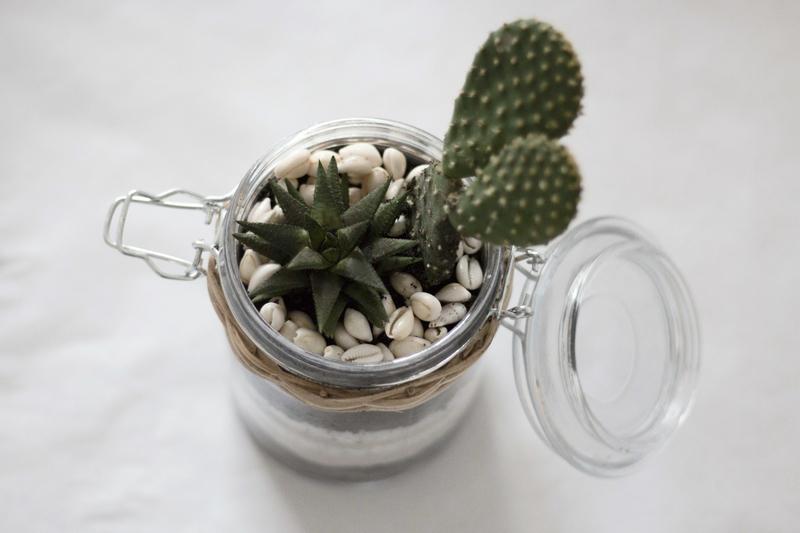 Terrarium %c3%a0 cactus 6